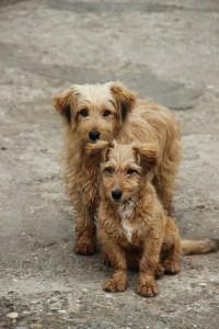 stockvault-brown-dogies130290